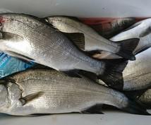 京都・丹後半島(宮津〜伊根)で魚を釣る方法教えます 【初心者】とにかく魚を釣りたい方向け!