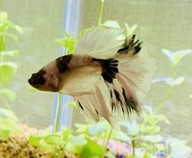 初めての熱帯魚飼育にお答えします お魚をお家で飼いたいけど困ってる方…お答えします!