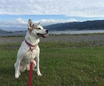 犬のしつけ・飼い方、困った!にお答えします 犬飼育歴15年のドッグライフカウンセラーがサポート