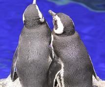 24時間独り占め!あなただけのペンギンになります とにかくコウテイしてほしい方必見!