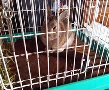 ウサギの飼い方教えます(*´ω`*)