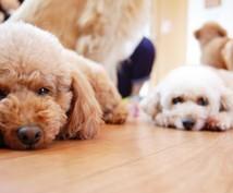 高次元ヒーリングであなたのペットを元気にします ペットのためのヒーリング!ペットは大事な家族の一員ですよ。