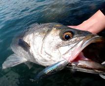 【夏版】東京湾シーバスポイント、釣り方、厳選ルアー教えます【オススメ】