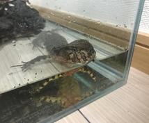 爬虫類、両生類の飼育方法を飼育員目線で教えます 生体が餌を食べない、大きくならないと感じたあなたへ!