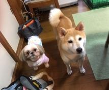 犬を飼いたいけれど迷っている方へアドバイスをします 可愛い保護犬と出会い、幸せ里親生活中です!