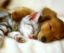 旅立ったコもアニマルコミュニケーションします 飼い主さまの愛するペットさんとお話させて頂きます。
