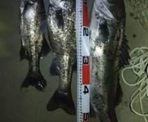 河口シーバスの釣り方教えます ルアーで狙う場合のポイント・レンジの見極めルアーのセレクト等