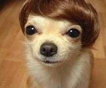 いつもの洗髪にチョイ足し!美髪になる方法