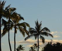 【ハワイ】ワイキキに住んでいる私がローカル情報をお教えします!(オアフ島限定)