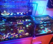 海水魚水槽、立ち上げや相談に乗ります 海水魚を始めるにあたって、疑問点などを答えます