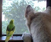 ペットちゃん⇔飼い主さんの通訳致します ペットちゃんの言い分、知りたくありませんか?