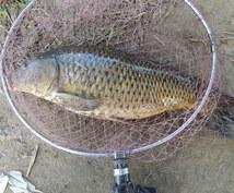 鯉釣りのエサの秘訣をお教えします 鯉釣り!エサ作り。簡単で自作のエサで釣りましょう