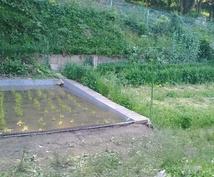 あなたの理想の自然菜園計画作り、お手伝いします 自然菜園のプランニングに悩まれている方にオススメ!