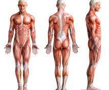 自宅で出来る効率的な筋トレメニュー提供します 体を鍛えたい男性、美容に気を使う女性へ