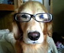 もう悩まない、犬のしつけ!おすすめの本を紹介します!
