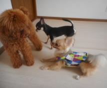 """ペットではなく""""家族""""だから。ドッグトレーナーが人も犬もより楽しい暮らしをお手伝いします。"""