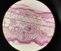 皮膚科学に基づいた本当のお肌ケアを教えます 東大大学院出身の皮膚研究者が教える本物の肌ケア!