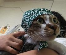 猫の口内炎を治したい❗️薬を使わない獣医師が症状を軽くする方法をアドバイスします。