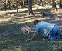 オーストラリア:ブリスベン、ゴールドコースト近郊の情報お教えします!