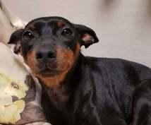 多頭飼い等犬の飼育悩み相談にのります ペット介護士資格あり。犬4匹飼ってます。