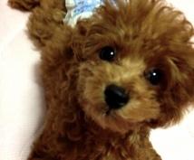 犬の病気、しつけ、お手入れ【トリマー】が答えます 〜これって病気のサイン?そのしつけ間違ってない?