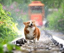 ペットの占いをします 犬、猫、小動物限定で性格や能力、気持ちを占います