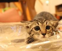 即日!猫についてのご相談どんなことでもお答えします ☆こんなときどうしたらいいの?をお教え致します☆