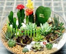 植物を育てるのが苦手!皆様へ適したアドバイスをさせて頂きます。(観葉植物、花、家庭菜園など)