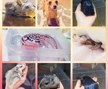 爬虫類(小動物)の飼育相談受けます 飼いたいけど不安・・・初心者さんのペットライフを支えます