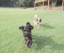 あなたのライフスタイルに合った犬種を提案します 犬を迎えたいけどどんな犬を迎えたらいいか迷っている方へ