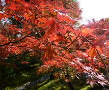 京都観光の旅行プランを作成します いろんなお寺に行きたいなら!効率よく回る術を伝授します!