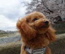 犬、わんちゃんの動画や写真をお譲りします 癒しをあなたにお届け致します!悲しみや苦しみを緩和致します!