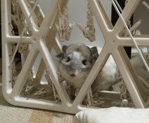 【♡❤︎♡❤︎小動物ソムリエ❤︎♡❤︎♡】あなたに合った小動物をご提案します♪♪♪♪♪