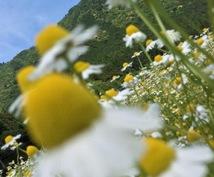あなたに合ったハーブの活用法を提供します 自然と植物のチカラで美健康へ♪