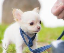 犬のしつけ相談受け付けます 愛犬とオーナー様のストレスフリーを目指して