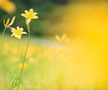 豊穣の黄金光線が豊かさを引き寄せます 物質的豊かさを求めているあなたへ