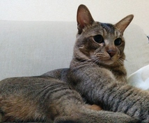 猫の飼い方、猫との生活