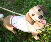 難しい性格の犬を飼ってる方にアドバイスします 保健所から超びびりの野犬を引き取った経験から助言します♡
