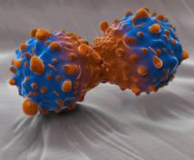 細胞周期、シグナル伝達、分子標的薬を解説します 4年制薬学部を卒業した現役薬剤師の方々へ(生涯教育)