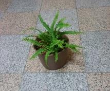 観葉植物などの育て方の相談にのります 植物のチョットした疑問を解消したい時にオススメ