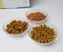 キャットフードの基本的な選び方、教えます 普段の診療で栄養指導している獣医師による基本ポイントを解説