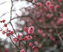 福島県の旅プロデュースします 広い福島県、会津だけが福島じゃないですよ。