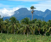 フィリピンの市場調査❗❗❗質問に答えます マニラにビジネス展開!旅行 英会話 留学 食べ物