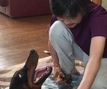 ペットに薬を使いたくないあなたへ、薬を使わない獣医師が元氣にする方法を教えます。