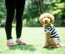 現役トレーナーが犬のゆるしつけ相談にのります 愛犬のちょっと困ったを気軽に相談したい方へ