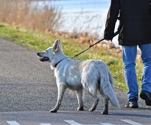 愛犬の感情やマインドを読み取ってお伝えします 愛犬のあの行動の原因も犬の生活を見るだけですべてが見えます