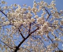 岐阜県高山市内の情報や調べたい場所に代わりに出向いて情報収集します(^-^)