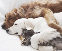 愛するペットにもレムリアの愛と癒しをお届けします 愛するペットにも、体、魂、肉体にレムリアの愛を♡