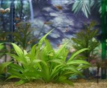 熱帯魚の飼い方の相談に乗ります 熱帯魚を飼うのが初めての方にもオススメ!