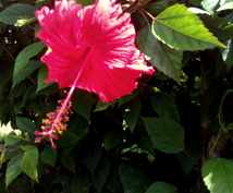 沖縄方言でやり取りします 沖縄本島出身者が方言でやりとりします!